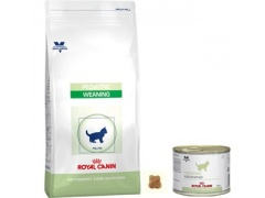 Royal Canin Pedriatric Weaning puszka 195g